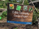 Edible Community Garden on the Brockton campus