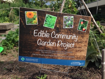 Massasoit's Edible Community Garden on the Brockton's campus